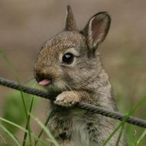 Profile picture of TheLeveret